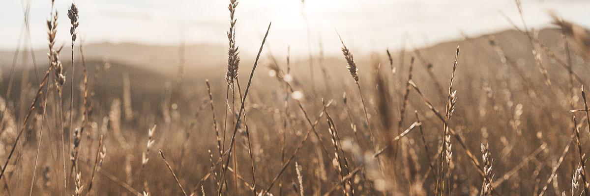 Hot dry, field Photo byBrandon WeekesonUnsplash