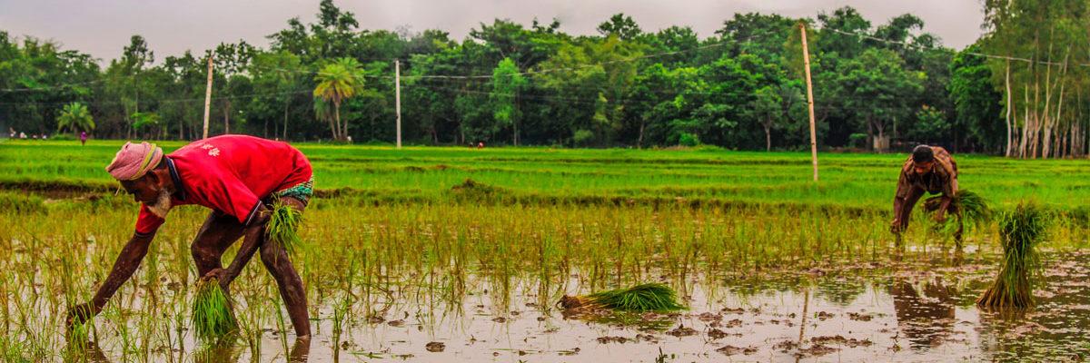 Farmers in Bangladesh, Photo by fardouse lomat jahan rumpa on Unsplash
