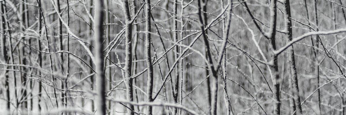 Trees in snow, US, Photo byAlexey KuzminonUnsplash