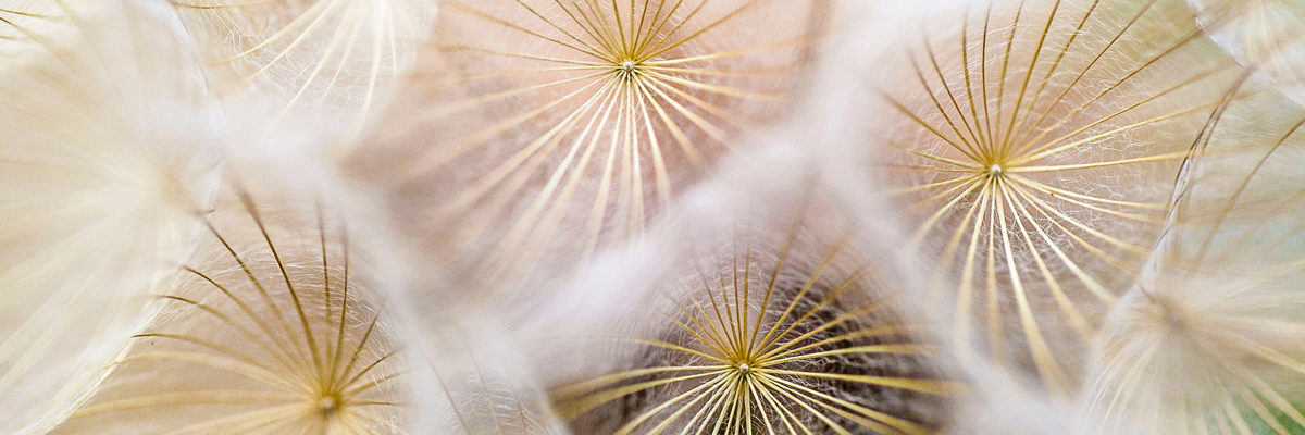 Seedheads. Photo by Paul Talbot on Unsplash