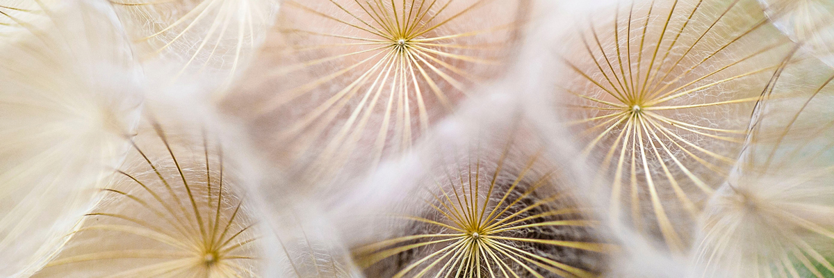Seedheads. Photo byPaul TalbotonUnsplash
